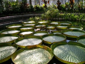 Lac gradina botanica