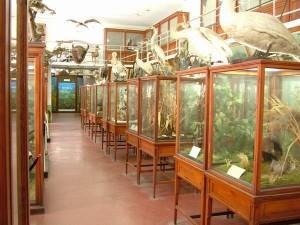 Muzeul Zoologic