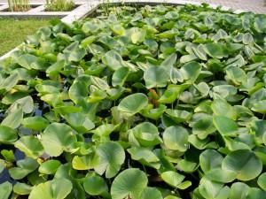 The Cluj-Napoca Botanical Garden
