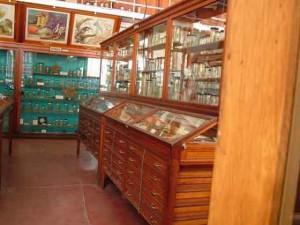 piese Muzeul Zoologic