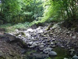 apa din Cheile Borzesti