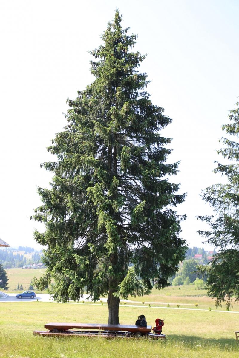 Manastirea Rasca Transilvana